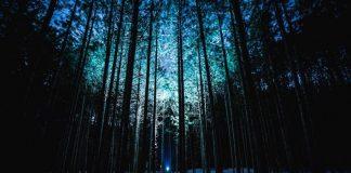 karanlıktakiler karanlık ışık