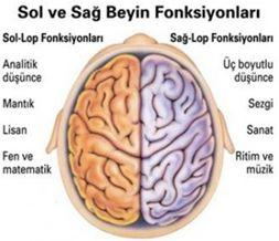 yunus terapi frekans sevgi beyine etki