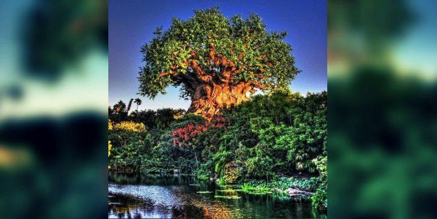 Hayat Ağacı: Tek olasılık