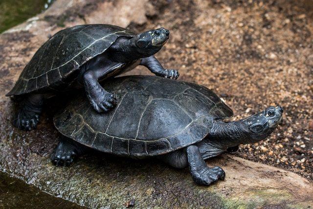 Kaplumbağa ve Maslow'un ihtiyaçlar hiyerarşisi
