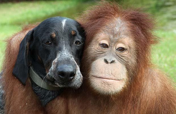 dost köpek dost maymun