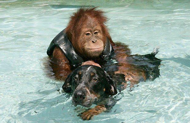 köpek maymun dost