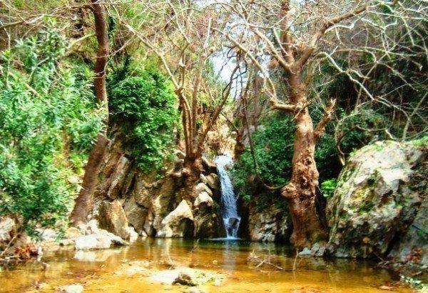 şifa orman dere nehir doğa