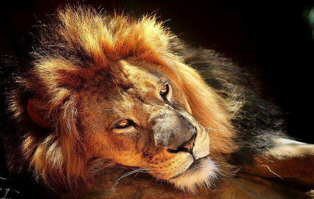 Astroloji: Aslanım Benim.Aslan Burcu 2012
