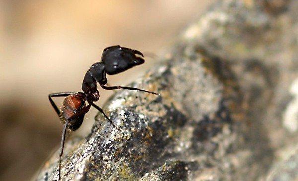 """Bozkır, Karınca ve Aşk:""""Dokunma ve sadece izle!"""""""