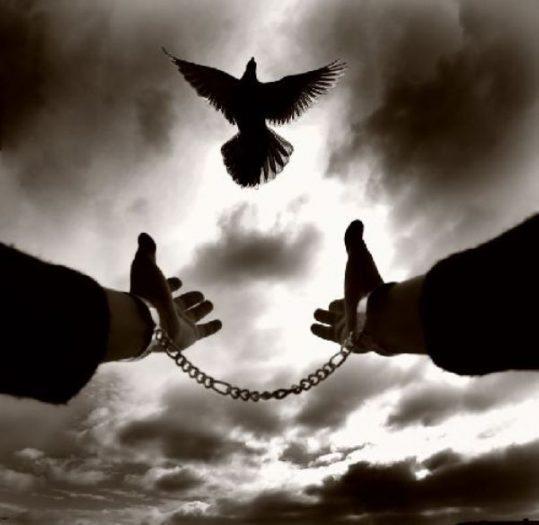 Özgürlük Düşüncede Başlar ve Düşünceden Özgürce Hayata Yansır