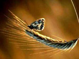 Astroloji: Başak burcu özellikleri 2012