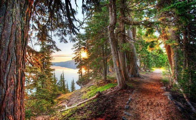 Ormanda iki yol vardı ben az kullanılan yolu tercih ettim