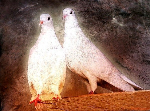 Ruhsal Yolun Kuralları ve Etikleri: Şems'in ve Aşk'ın Kırk Kuralı