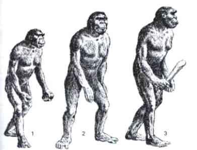 Hominid, Homo erectus, Homo habilis