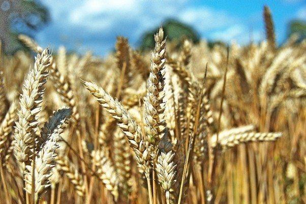 arpa buğday çiftçi gıda fiyatları