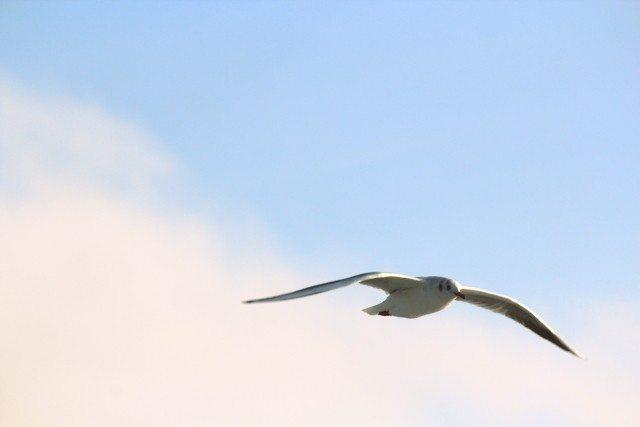 Uç! Daha Yükseğe Uç Yürekli Ol! Özgür ol!