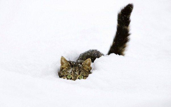 sokak kedisi kediler soğuk hava kar yağışı