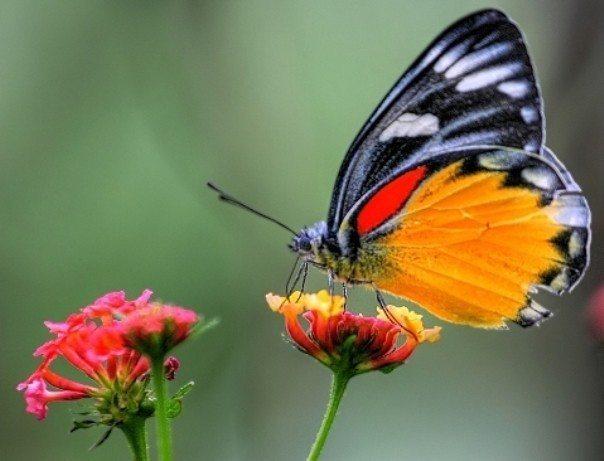 kelebeği anlamak-indigodergisi