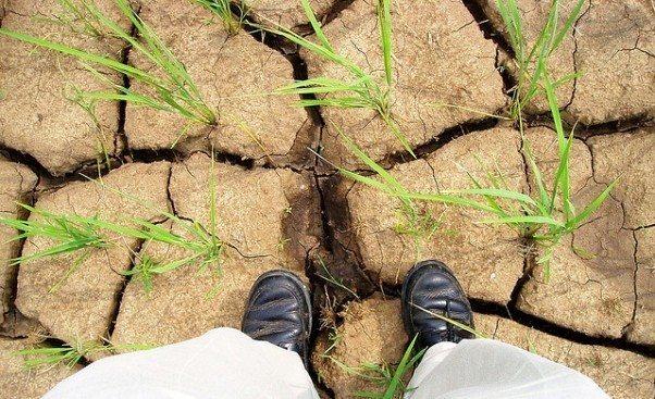 doğa insan küresel kriz kuraklık gıda fiyatları