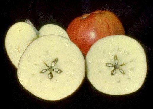Elma ortadan kesilince pentagram şekli çıkmaktadır.