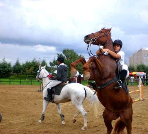 at çifliği