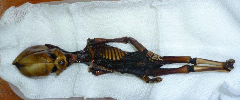 atacama humanoid insansı uzaylı iskelet