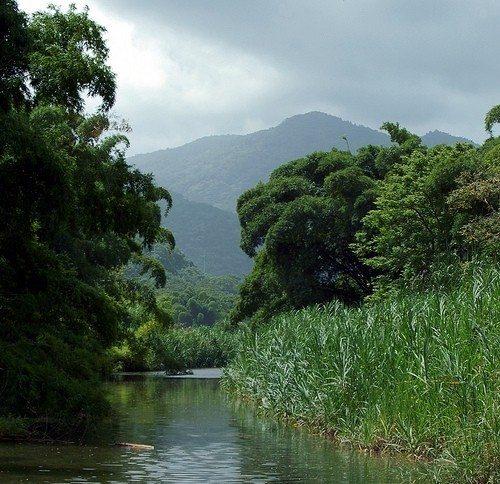 tropikal-yagmur-ormanlari-hakkinda-bilgi,2,con
