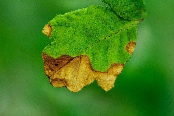 değişim yaprağı