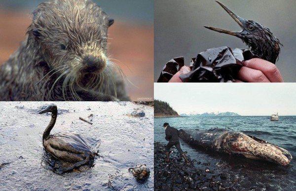 kuzey kutbu hayvanlar buz