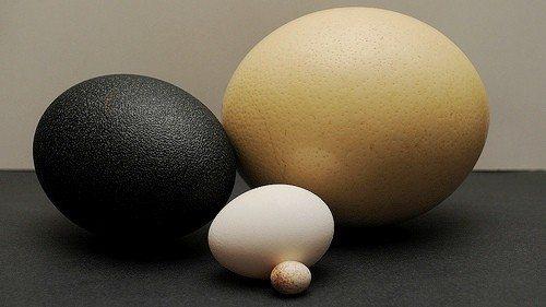 Tavuk mu Yumurtadan Yumurta mı Tavuktan Çıkar?