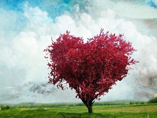 aşk ağacı