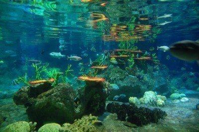 okyanusta yaşam