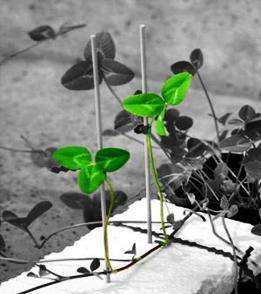 bitkiler_chat_yapiyor