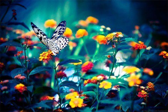 çiçeklerve kelebek