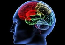 İnsan beyninin şifresi: İnsan beyni ve unutmak