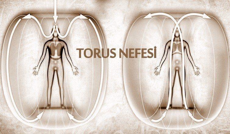 torus2_web