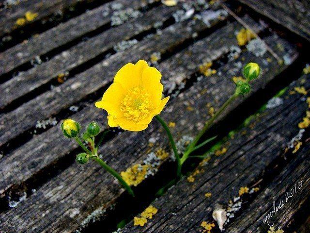 çiçek dergi elini ver 1