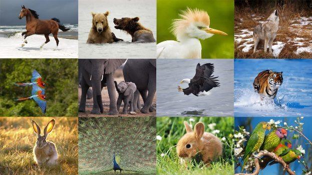 dünyanın en büyük hayvanı, en hızlı hayvanı, en güçlü hayvanı, en zehirli hayvanı, en hızlı hayvanı, yaşam insan, hayvanlar alemi, hayvanları koruma günü-indigodergisi