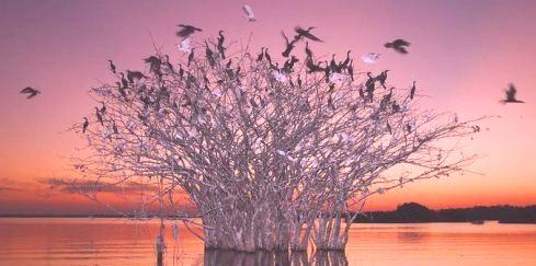 ağaç-kuşlar-indigodergisi