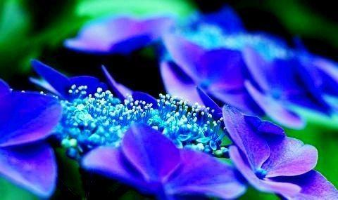 çiçek-taç yaprakları-indigodergisi
