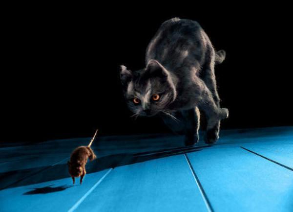 kediler ve fareler-indigodergisi