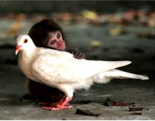 sevgi-hayvanlar-indigodergisi