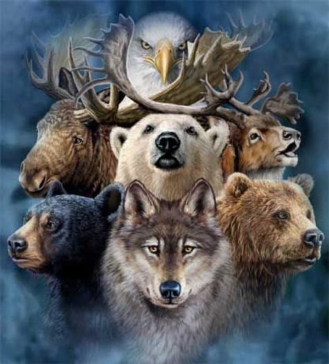 güç hayvanı totem hayvan totemler hayvan ayı kurt geyik kartal hayvan kaplumbağa