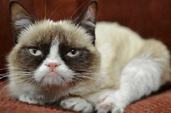 Tembel pisicik Düşük pille yaşamak