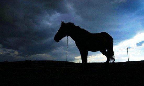 kars at atlar bilge köylü köylüler ova köylü milletin efendisi ülker yıldızı tarla ekin tarım