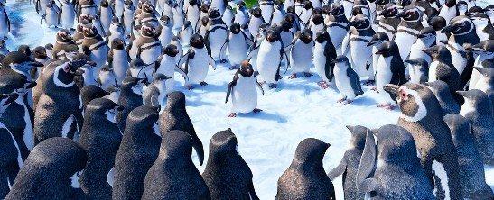 neseli-ayaklar-2-penguenler