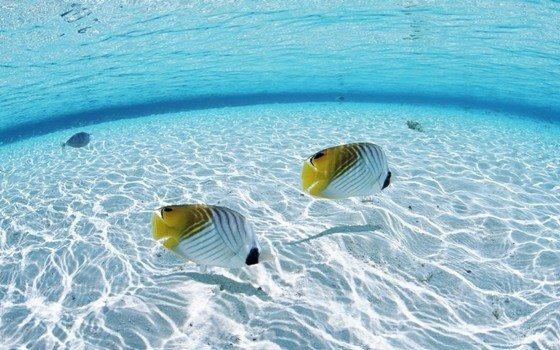 okyanusta balık filozof balık