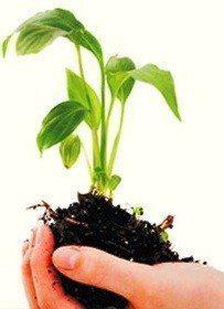 Etik Yatırım Hareketi nedir? çiçek toprak saksı sürdürülebilir