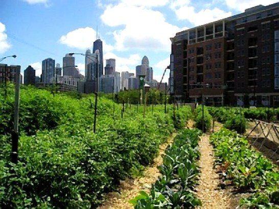 Kent bahçeciliğinin yararları sürdürülebilir