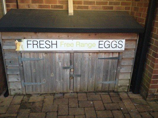 yumurta sandığı