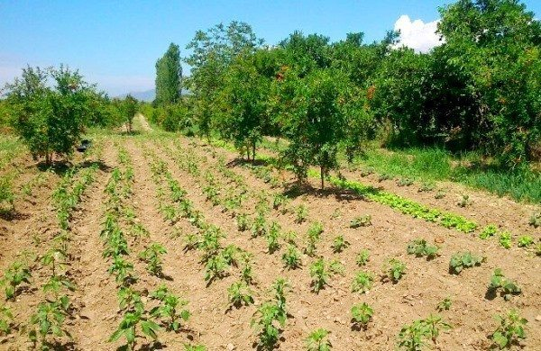 ipek hanım çiftliği pınar kaftancıoğlu (9)