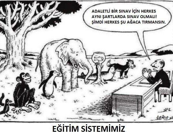 türl eğitim sistemi