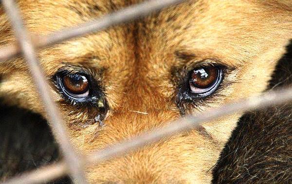 pet shop köpek hayvan satışı