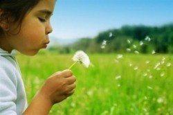 puf puf çiçeği